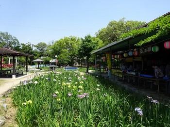 150527知立公園花しょうぶまつり⑤、会場 (コピー).JPG