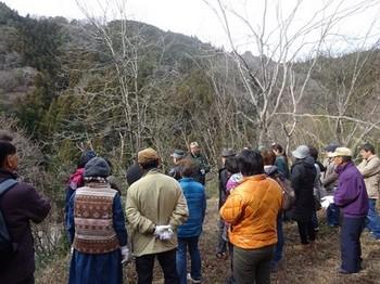 170129ふるさと食の再発見「寒茶」09、水戸地区で茶の木狩り (コピー).JPG