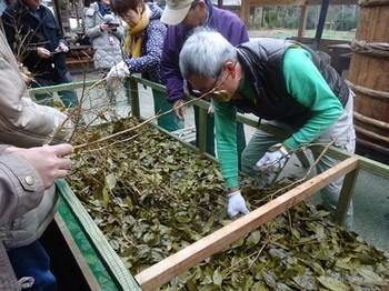 170129ふるさと食の再発見「寒茶」31、寒茶作り(茶葉は外し) (コピー).JPG