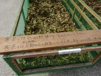 170129ふるさと食の再発見「寒茶」32、寒茶作り(日干し乾燥) (コピー).JPG