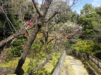 170310東山荘⑤、茶花園 (コピー).JPG