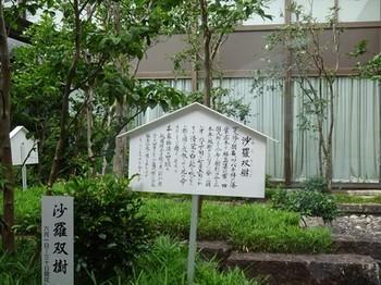 170622三甲美術館⑨、中庭 (コピー).JPG