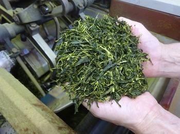 s_170706深緑茶房見学会32、精揉後の茶葉.JPG