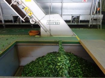 s_171010深緑茶房見学10、茶工場.JPG