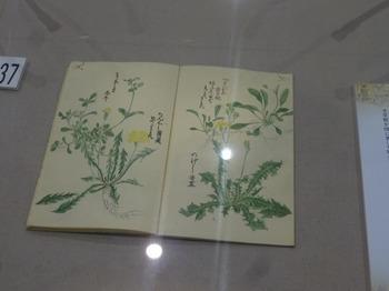 s_171228西尾市岩瀬文庫⑫、救荒草品図譜.JPG