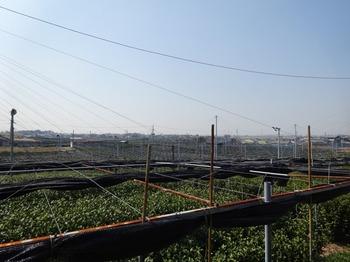 s_180315西尾の抹茶めぐり⑬、稲荷山茶園公園.JPG