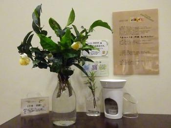 s_181113深緑茶房お茶教室04、お茶の枝.JPG