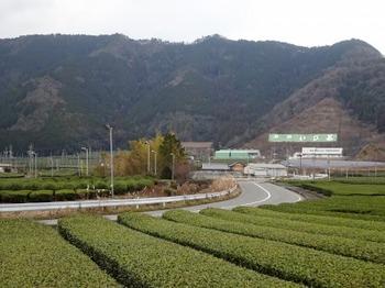 s_190108いび茶の里08、西美濃お茶街道と茶畑.JPG