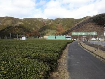 s_190212いび茶の里11.JPG